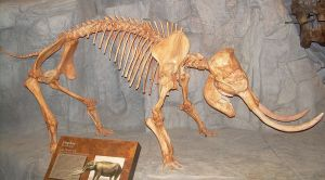 1280px-Elephas_skeleton