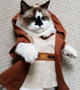 cute-cat-Jedi-costume-Star-Wars-robes