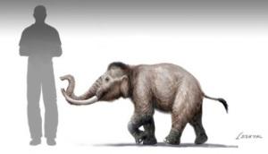 Elefante_20nano__sicilia