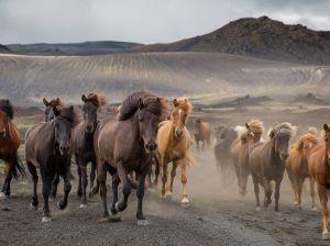 iceland-highlands-horses-stampede_86229_990x742