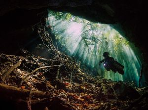 mexico-mangroves-cenote-diving_86767_990x742