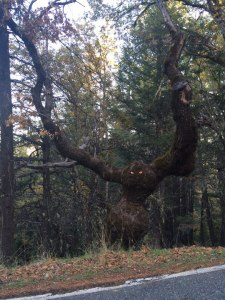 funny-tree-scary-eyes-arms