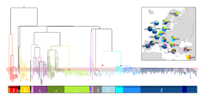the Y chromosomal tree generated from our European samples, with their most recent shared ancestor at the top. Different major branches are displayed in different colours. Credit: Nature Communications