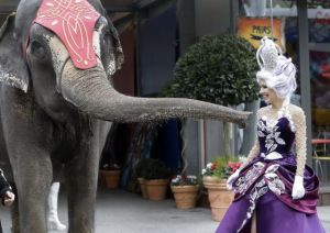 An elephant poses with a circus performer during the presentation of the 39th Monte-Carlo International Circus Festival in Monaco, Tuesday, January 13, 2015.The Circus Festival takes place from Jan. 15 to Jan. 25. (Photo by Lionel Cironneau/AP Photo)