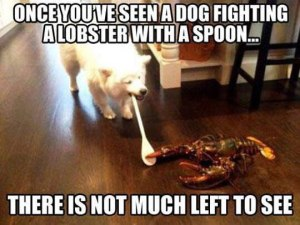 funny-dog-fighting-lobster-spoon