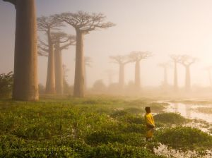 girl-baobab-trees_90162_990x742