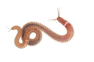 2_polychaetewormgal.ngsversion.67c529169cdaf341e642dec2a1ab588f.adapt.885.1