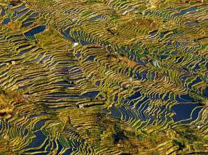 aerial-rice-terrace-china_90679_990x742