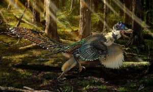 featheredcou