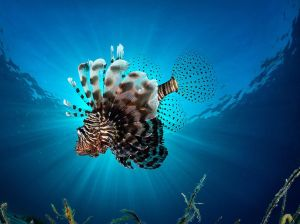 lionfish-underwater-sunlight_91006_990x742