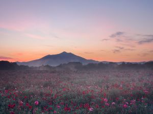 mountain-view-poppies_90684_990x742