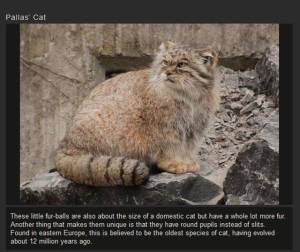 a_few_of_the_weird_and_wonderful_cat_species_in_the_world_640_02