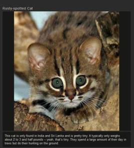 a_few_of_the_weird_and_wonderful_cat_species_in_the_world_640_14