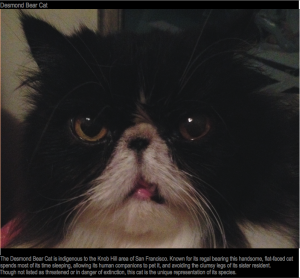 a_few_of_the_weird_and_wonderful_cat_species_in_the_world_640_16