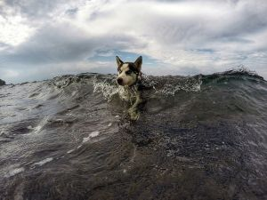 husky-swim-bali_91649_990x742