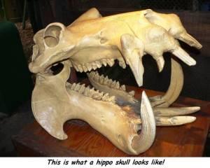skull87