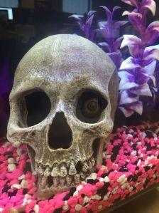 skullacid_picdump_77