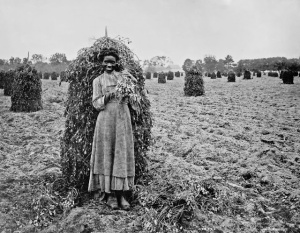 Young woman posing with picked peanuts, ca. 1900