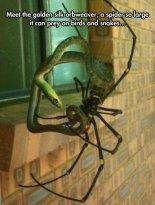 funny-spider-prey-snake-web