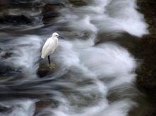 heron-river-japan_92074_990x742