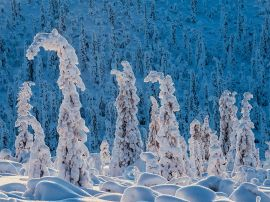 snow-spruce-norway-haarberg_91893_990x742