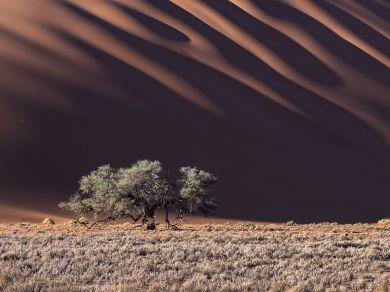 tree-dunes-namib-desert_91838_990x742