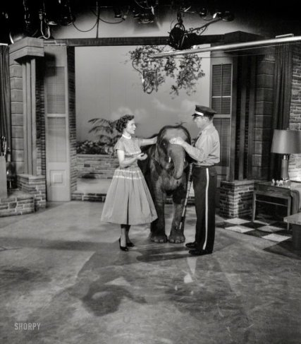 1954. %22Betty White with elephant on her daytime TV show.