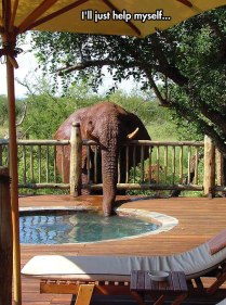 cool-elephant-drinking-water-Jacuzzi