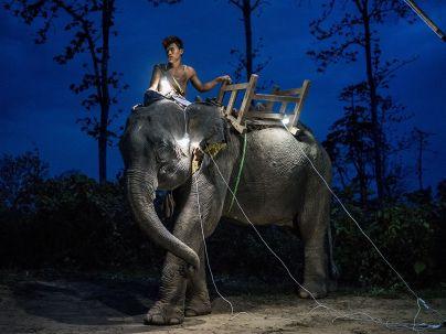 elephant-solar-portrait_92210_990x742
