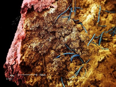 nematode_stalactite.jpg__800x600_q85_crop