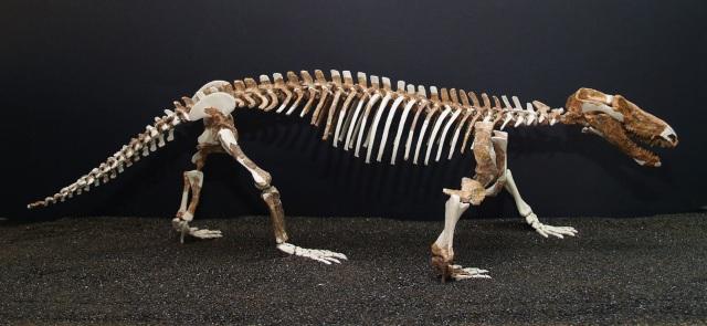 140307-procynosuchus.JPG