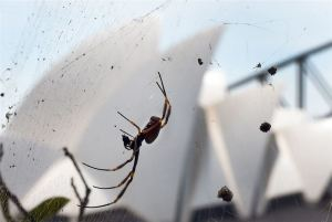 spidersyd
