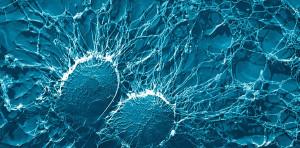 bacteria-67791-900x444
