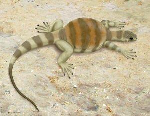 800px-Eunotosaurus_africanus
