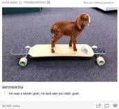 amusing_tumblr_posts_about_animals_that_will_have_you_in_fits_of_laughter_640_14