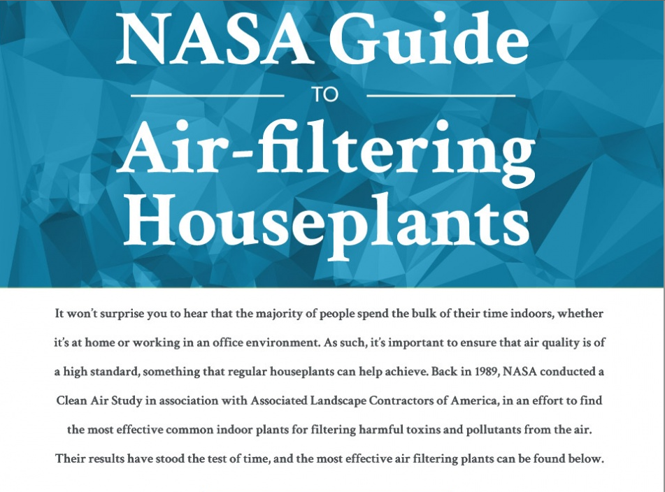 Nasa guide to air filtering houseplants stannous for Nasa air study