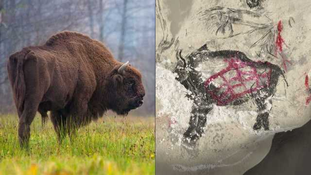 ancient-dna-holds-clues-to-higgs-bison-cave-painting-mystery_0