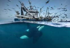 finalists_of_the_52nd_annual_wildlife_photographer_of_the_year_competition_640_01