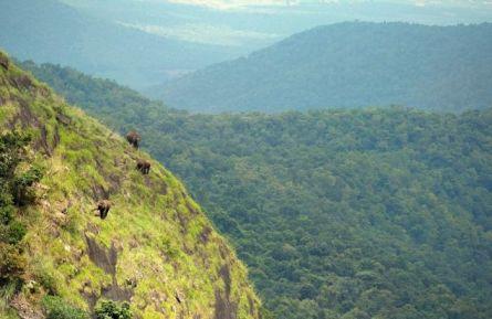 Wild elephants acting like mountain goats!