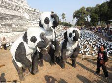 panda_elephant
