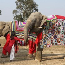 people-knit-giant-sweaters-rescue-elephants-6