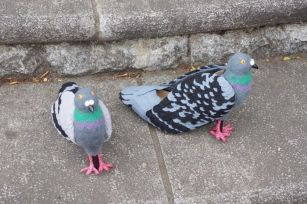 shoes_pigeons_05